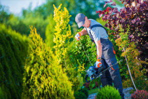 hedge trimming services in charlotte nc
