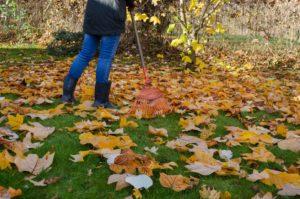 leaf removal charlotte nc, leaf removal matthews nc