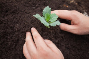 tree planting charlotte nc