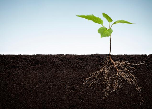 Charlotte Mulch Soil Health