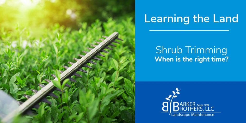 When is the right time to trim shrubs